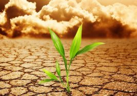 climate-change-and-ag-11